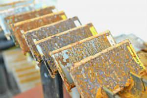 Salznebenkammer Test Caramba Chemie